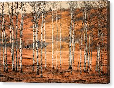 Birtch Trees Canvas Print by Naman Imagery
