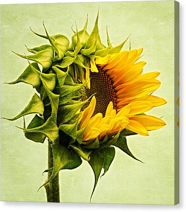 Birth Canvas Print by Philippe Sainte-Laudy