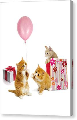 Birthday Kitties Canvas Print by Bob Nolin