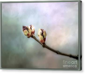 Canvas Print featuring the photograph Birthing Of A Lilac by Brenda Bostic