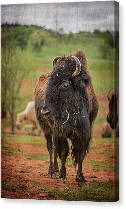 Canvas Print featuring the photograph Bison 5 by Joye Ardyn Durham
