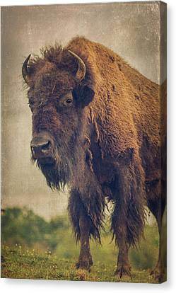 Canvas Print featuring the photograph Bison 8 by Joye Ardyn Durham