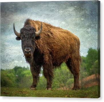 Canvas Print featuring the photograph Bison 9 by Joye Ardyn Durham