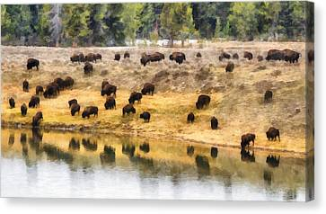 Bison At Indian Pond Canvas Print
