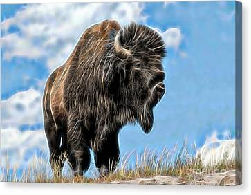 Bison Collection Canvas Print