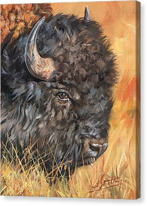Canvas Print featuring the painting Bison by David Stribbling