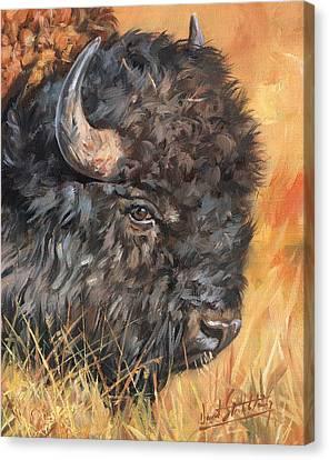 Bison Canvas Print by David Stribbling
