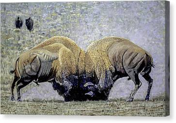 Bison Fight Original Oil Painting 60x36x1.5 Inch Canvas Print