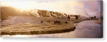 Bison Firehole River Yellowstone Canvas Print by Panoramic Images