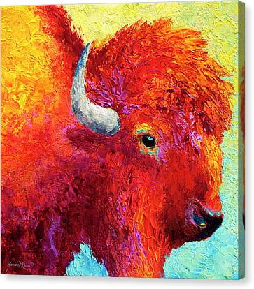 Bison Head Color Study Iv Canvas Print by Marion Rose