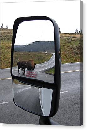 Bison In My Rear View Canvas Print