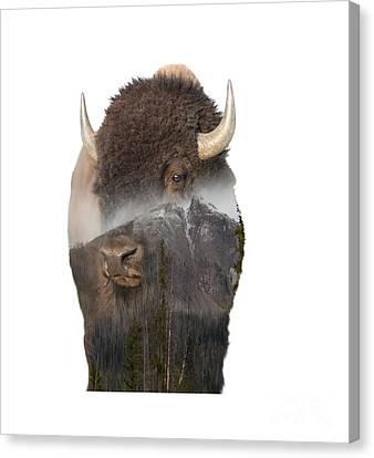 Bison Mountain  Canvas Print
