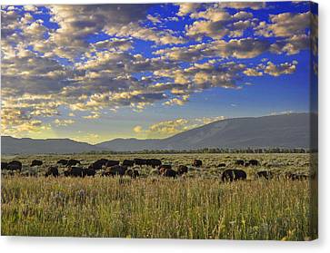 Bison On Antelope Flats Wy Canvas Print by Vijay Sharon Govender
