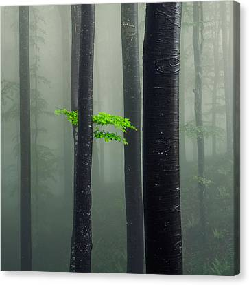 Bit Of Green Canvas Print by Evgeni Dinev