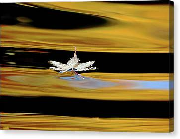Abstract Water And Fall Leaves Canvas Print - Black And Gold Autumn Abstract by Debbie Oppermann