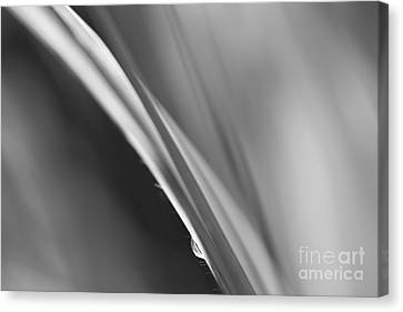 Black And White Abstract - Sole Waterdrop In Grass - Natalie Kin Canvas Print