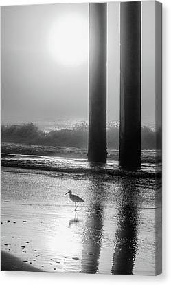 Canvas Print featuring the photograph Black And White Bird Beach by John McGraw