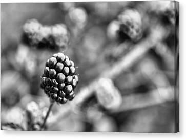 Black And White Blackberry Canvas Print