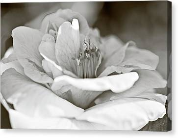 Canvas Print featuring the photograph Black And White Camellia Flower by Frank Tschakert