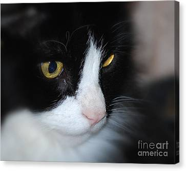 Canvas Print featuring the photograph Black And White Cat by Lila Fisher-Wenzel