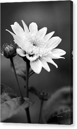Canvas Print featuring the photograph Black And White Coreopsis Flower by Christina Rollo