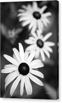 Canvas Print featuring the photograph Black And White Daisies by Christina Rollo