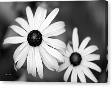 Canvas Print featuring the photograph Black And White Daisy by Christina Rollo