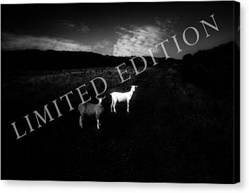 Black And White Canvas Print by Dorit Fuhg