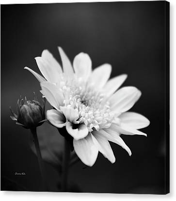 Black And White Flower Canvas Print by Christina Rollo