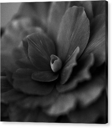 Black And White Flower Fifty Canvas Print by Kevin Blackburn