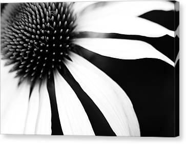 Black And White Flower Maco Canvas Print