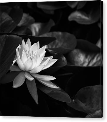 Black And White Flower Nine Canvas Print by Kevin Blackburn