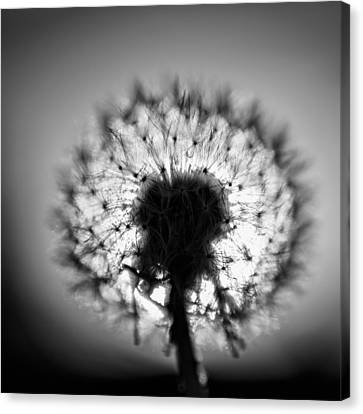 Black And White Flower Ten Canvas Print
