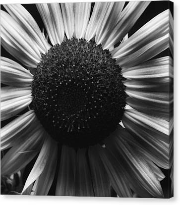Black And White Flower Twelve Canvas Print by Kevin Blackburn