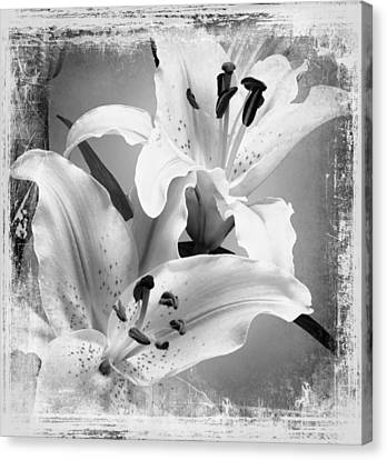 Black And White Grunge Lilies Canvas Print by Georgiana Romanovna