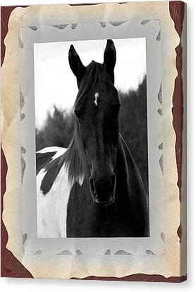 Black And White Horse Portrait Canvas Print by Debra     Vatalaro