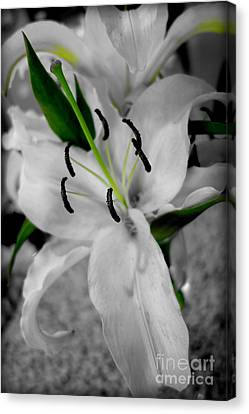 Black And White Life Canvas Print by Kip Krause