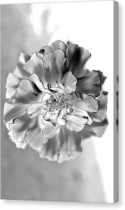 Black And White Marigold Canvas Print