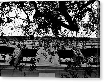 Canvas Print featuring the photograph Black And White Old Town Pasadena Building Tree View by Matt Harang