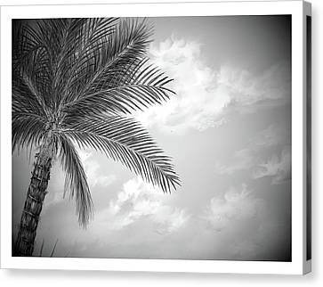Canvas Print featuring the digital art Black And White Palm by Darren Cannell