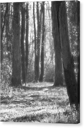 Black And White Path In The Forest Canvas Print by Dan Sproul