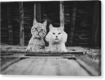 Black And White Portrait Of Two Aadorable And Curious Cats Looking Down Through The Window Canvas Print