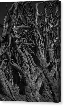 Black And White Roots Canvas Print