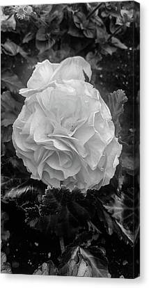 Black And White Rose Canvas Print by Britten Adams