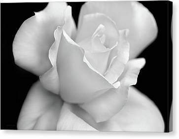 Canvas Print featuring the photograph Black And White Rose Flower by Jennie Marie Schell