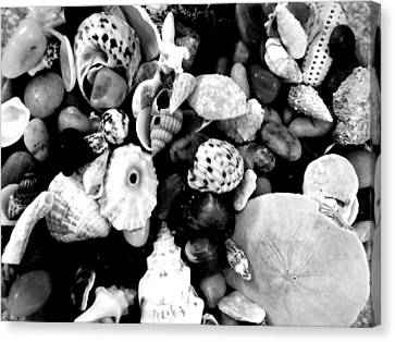 Black And White Seashells Canvas Print by Kimberly Perry