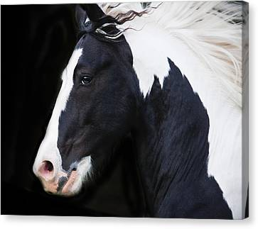 Black And White Study Canvas Print by Terry Kirkland Cook