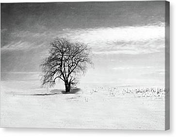 Black And White Tree In Winter Canvas Print by Brooke T Ryan