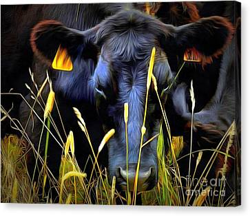 Black Angus Cow  Canvas Print by Janine Riley