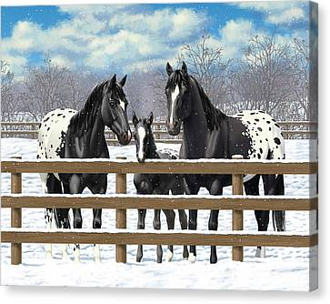 Black Appaloosa Horses In Snow Canvas Print by Crista Forest